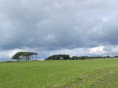 Big Thick Clouds, Fowlsheugh, Crawton, Aug 2018 (allanmaciver) Tags: big thick clouds trees farmland low view grey wind colder green east coast allanmaciver