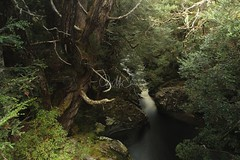 Enchanted Walk (Caleb McElrea) Tags: cradlemountainlakestclairnationalpark cradlemountain unesco worldheritagesite tasmaniansouthwestwilderness tasmania wilderness
