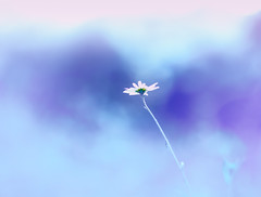 In the clouds (Tomo M) Tags: lifeisarainbow azul blue bleu flower bokeh pastel dreamy blur soft summer nature plant helios outdoor