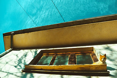 Sharka 5 | Cats Edition 10 (Robert Krstevski) Tags: robertkrstevski cat cats pet pets animal animals kitty kitten outdoor nature catsedition catsedition10 kittens kitties gato gatos nikon nikond3300 sky house window windows lines