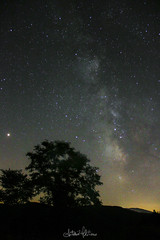 Sotto un cielo di stelle (antoniomolitierno) Tags: notte night via lattea milky way stelle stars star stella panorama alberi tree natura nature astrofotografia astrofoto astrophoto canon eos 760d perseidi cielo albero silhouette