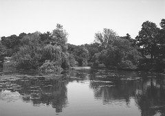 op - on the river leam (johnnytakespictures) Tags: olympus pen ee3 ferrania filmferrania p30alpha p30 blackandwhite bw panchromatic film 35mm analogue leamingtonspa leamington warwickshire river canal stream water nature natural leam tree trees landscape