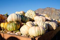 springville-pumpkin-fest-9 (dav.d) Tags: autumn bush daniels family jakers october patch pumpkin springville