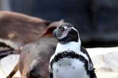IMG_0697 (Bob_lewerissa) Tags: wildlands emmen zoo canon 80d 70200 l non is usm