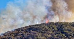 The back burn (2) (geemuses) Tags: fire burn flame water sea ocean manly bush bushfire smoke helicopter drobroydhead newsouthwales nsw australia landscape scenic fiery sky blue green