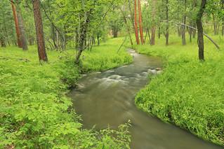 Grace Coolidge Creek, Grace Coolidge Natural Area, Custer State Park, Custer County, South Dakata 3
