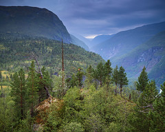 Utladalen I (Gustaf_E) Tags: berg birch björk fjord fjäll forest jotunheimen kväll landscape landskap nationalpark norge norway pine pines regn skog sommar tall urskog utladalen woods
