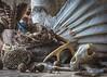Biologist's Booty (Lisa Bell Jamison) Tags: wildlifebiology biologist wildlife feathers nest skull coyoteskull egg antler waspnest birch wood