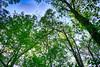 DSC05418-20_HDR (Capt Kodak) Tags: chattahoocheerivernationalrecreationarea hdrefexpro2 madefrom3images medlockbridgepark nationalparkservice nikcollectionbygoogle niksoftware photomerge spring