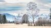 Nature reserve Rheindelta, Rohrspitz (Alta Alteo) Tags: rhein delta bodensee österreich naturschutzgebiet birke weide wiese