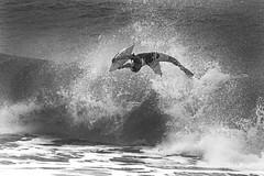 Wave hunter V (alestaleiro) Tags: ocean wave ola onda ride bodyboard estaleirinho acambody mono monochrome monocromo alestaleiro