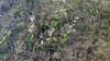 Coiled Tape seagrass (Enhalus acoroides) (wildsingapore) Tags: seagrasses enhalus acoroides pulau semakau south singapore marine coastal intertidal shore seashore marinelife nature wildlife underwater wildsingapore
