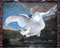 The Threatened Swan   Jan Asselijn   c.1650   The Rijksmuseum-35 (Paul Dykes) Tags: rijksmuseum museumofthenetherlands art gallery museum amsterdam netherlands nl holland thethreatenedswan janasselijn 1650