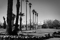 Buckhorn 00153 (m.r. nelson) Tags: mesa arizona az america southwest usa mrnelson marknelson markinaz streetphotography urban urbanlandscape artphotography newtopographic blackwhite bw monochrome blackandwhite