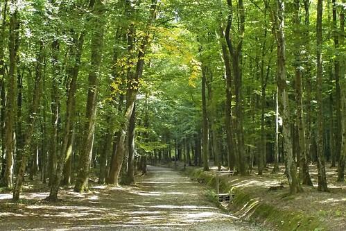 Bakónaki erdő