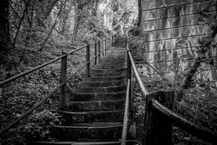 Wetheral Steps (Charlie Little) Tags: wetheral steps cumbria blackandwhite bw nikon d7200
