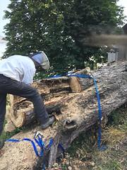 Bienen werden aus dem Baum gerettet. Tolle Aktion! (Basel101) Tags: tree wood keeping beekeeping switzerland swiss bee bienen