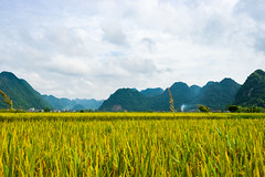 Bắc Sơn T07/2018 (Le Quang Photography) Tags: landscape nature ricefield terrace vietnam abstract agriculture asia asian background beautiful blue color colorful culture curve earth ecology environment farm farmer farming field green ground grows harvest horticulture imposing indochina land mountain myanmar natural pattern plant plough plow rake rice river rough saigon sapa soil summer transplant travel valley water