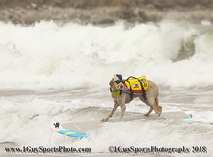 2018 NorCal 3rd Annual World Dog Surfing Championship at Linda Mar Beach (1GuySportsPhotography) Tags: 1dx 1guysportphoto 1guysportsphotography dog pacific surfing canon canon400mm dogsurfing sportsphotography surfdog pacifica california us usa