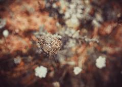 Lost in Bokeh (Herr Nergal) Tags: alpha6000 sony ilce6000 sigma30mm close up art kunst blurry bokeh verschwommen natur blume flower macro closeup 7dwf chaotic
