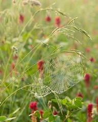 At the field's edge, Tuscany (DavidO'Brien) Tags: tuscany sonya7r spidersweb morningdew digital italy