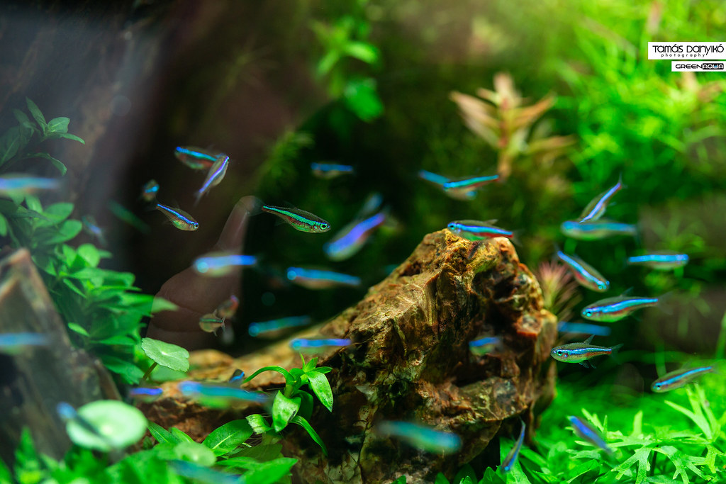 the world s best photos of aquascape and planted flickr hive mind