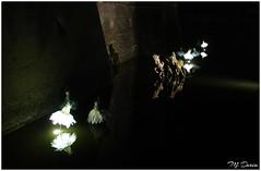 Ballet dancers and horses on water (Claude M.D.) Tags: mantua mantova italy italian ghost fantasma spectral reflection reflexion reflejo reflejos reflections spirit soul alma horse horses caballo caballos cavallo cavalli water agua acqua eau