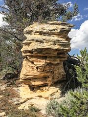 Sandstone Hoodoo (wyojones) Tags: wyoming bighorncounty bighornmountains alkaliroad hoodoo sandstone pennsylvaniantensleepsandstone pillar pinyonpine trees crossbedded column erosionalremnant wyojones