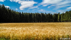 3 niveaux (Lцdо\/іс) Tags: champs blé nature belgique luxembourg juillet 2018 original culture forêt forest