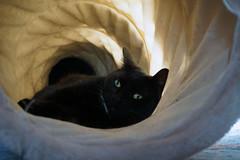 Flöckchen im Rascheltunnel (samgi2) Tags: cats haustier tier indoor pets cat kitty kitten pet animal cute gato feline canon nrw germany katzen katze black welpen baby natur tabby kuschelig beautiful sony hitze sommer