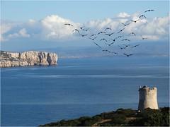 Punta Giglio (antonè) Tags: puntagiglio torredellapegna baiadiportoconte alghero mare cielo rocce uccelli nuvole panorama sardegna