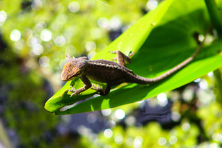 Lizard on his perch