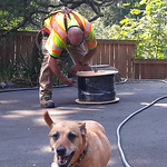 Rosie the dog, Chris from Comcast, running a new line, coil of cable, hose, summer, Lakota Lhamo Ling, Washington, USA thumbnail