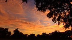 Fire in the Sky (Jim Mullhaupt) Tags: sunset sundown dusk sun evening endofday sky clouds color red gold orange pink yellow blue tree palm outdoor silhouette weather tropical exotic wallpaper landscape nikon coolpix p900 jimmullhaupt manateecounty bradenton florida cloudsstormssunsetssunrises photo flickr geographic picture pictures camera snapshot photography nikoncoolpixp900 nikonp900 coolpixp900