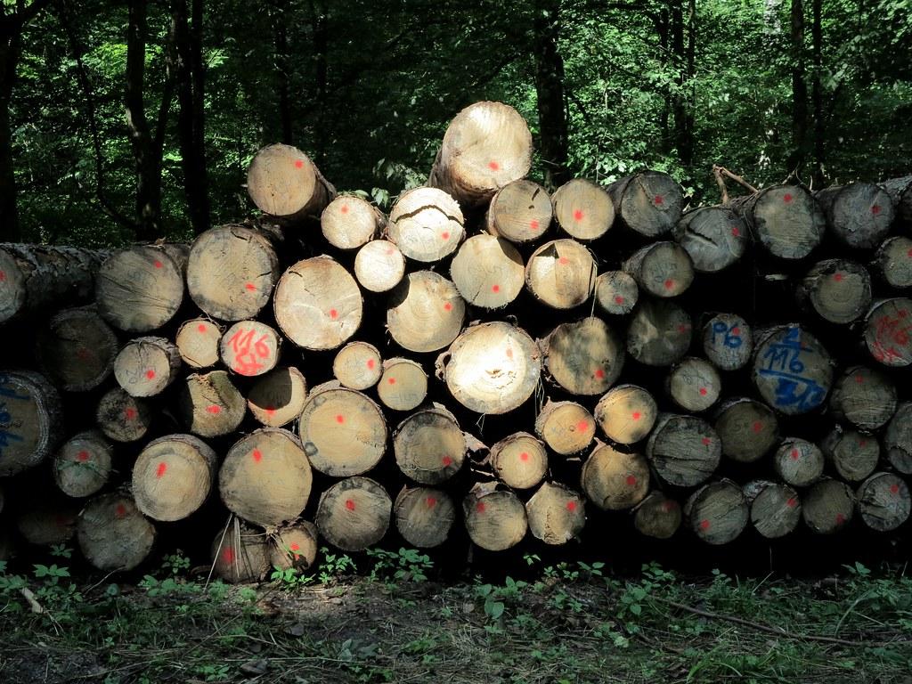 Lieblich Festmeter / Tagged Timber (bartholmy) Tags: Lichtenwald Hegenlohe Bawü Wald  Forest Holz Stamm