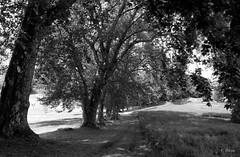 Parc du château de Méréville (Philippe_28) Tags: 24x36 argentique analogue camera photography film 135 bw nb méréville parc fabrique essonne 91 france europe iledefrance