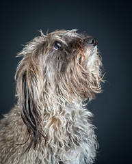 _MGL8844 (poloimages1) Tags: 2018 dogphotography fernando jackrussell poodle popupdogphotography princealbert
