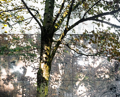 Tree & Shadows (Orbmiser) Tags: mzuiko ed 1240mm f28 pro 43rds em1 mirrorless olympus ore portland m43rds wall tree shadows sidewalk mzuikoed1240mmf28pro