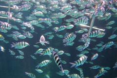 IMGP0051 (Christine Gerhardt) Tags: fisch makadibay redsea rotesmeer tierfoto underwaterphotography unterwasserfotografie ägypten egypt