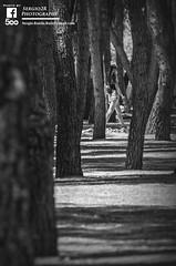 Entre pinos (Sergio2R Photography) Tags: pino tree arbol albacete españa spain girl chica blancoynegro blackwhite