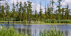 Swamp People Territory (beverlyks) Tags: louisiana holidays roadtrip southwestlouisiana tourist travel cajuncountry bayoucountry atchefalaya swamp swamppeople cajun bayou