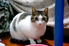 Hi, I am Sam (Steve only) Tags: sony nex5r carl zeiss sonnar fe 2835 za t 3528 35mm f28 cats sam