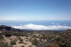 Guajara summit view (Riverman___) Tags: tenerife spain hiking mountain volcano teide guajara flower sky tajinaste summit camino de teresme barranco del infierno