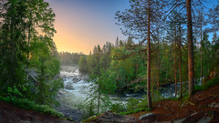 Kitkajoki sunrise (M.T.L Photography) Tags: riverkitkajoki sunrise summer sky tree forest water river stream grass green mtlphotography panoramicphotography nikond810 kuusamo juuma myllykoski mist fog night early mikkoleinonencom landscape