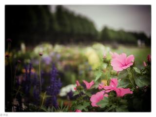 Schloßpark Schwetzingen Flower