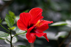 Waiting (Nikolaos Gavrilakis) Tags: gavrilakis nikon d750 tamron 70300 stuttgart wilhelma garden flower red κόκκινο λουλούδι κήποσ στουτγάρδη νίκοσγαβριλάκησ