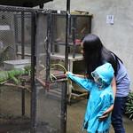 chiangmai-set2- (101) thumbnail