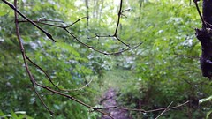 Carmack Woods Wetlands (dankeck) Tags: sticks branches bare wet rain raindrops trail path woods theohiostateuniversity ohiostate osu columbus ohio centralohio franklincounty