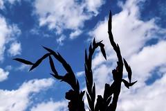 Gladioli (rustyruth1959) Tags: sword flower window sky gladioli silhouette saturdayselfchallenge ssc ripponden yorkshire england uk tamron16300mm nikond5600 nikon spikes buds clouds nature black gladiolus plant explore explored inexplore