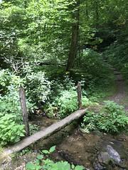 No Handrail? (esywlkr) Tags: smokies gsmno greatsmokymountainsnationalpark nc northcarolina trail nature outdoors